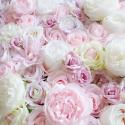 Mur de Boutons de Roses - Le Twiggy